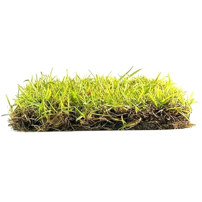 Turfgrasses for the Woodlands - All American Stone and Turf